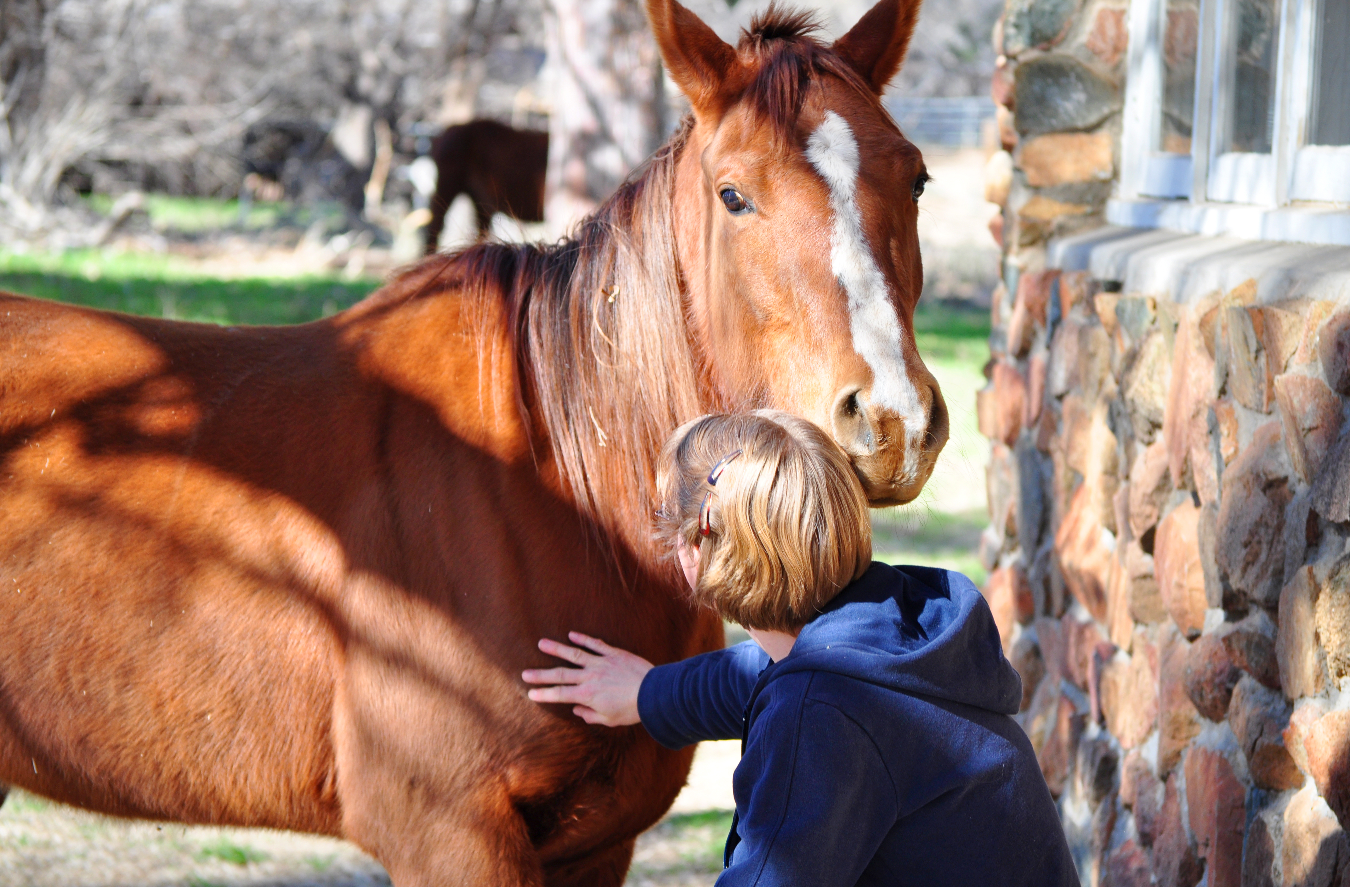 Equine_Student_Petting_Horse